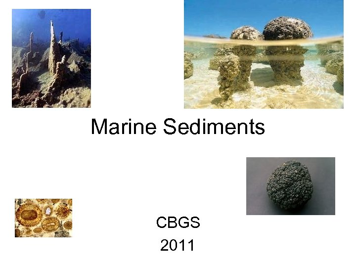 Marine Sediments CBGS 2011
