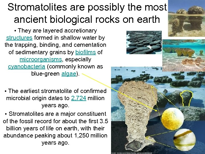 Stromatolites are possibly the most ancient biological rocks on earth • They are layered