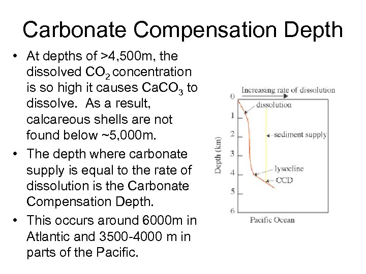 Carbonate Compensation Depth • At depths of >4, 500 m, the dissolved CO 2