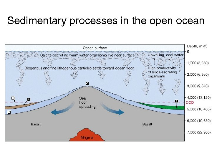 Sedimentary processes in the open ocean
