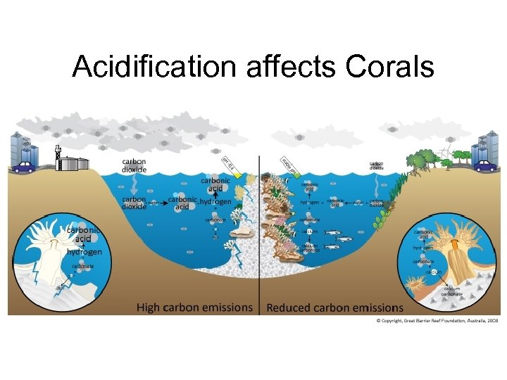 Acidification affects Corals