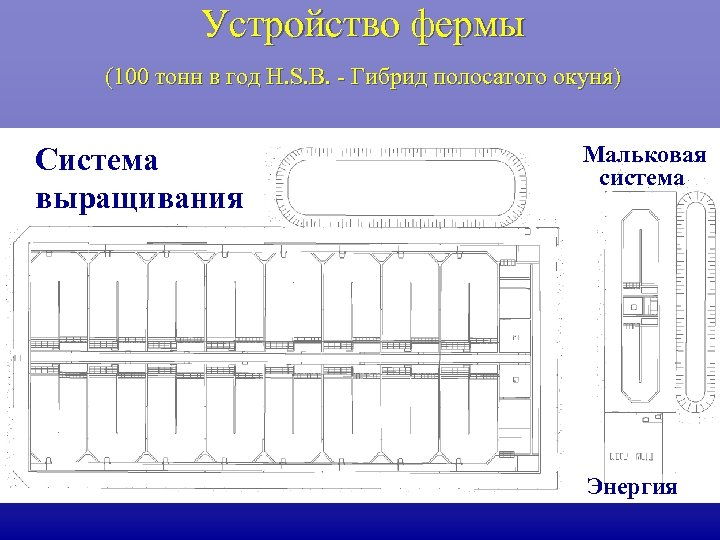 Устройство фермы (100 тонн в год H. S. B. - Гибрид полосатого окуня) Система