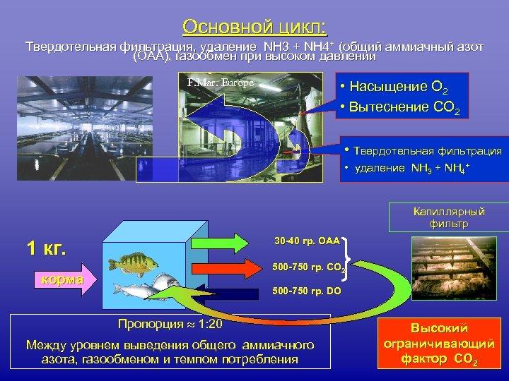 Основной цикл: Твердотельная фильтрация, удаление NH 3 + NH 4+ (общий аммиачный азот (ОАА),