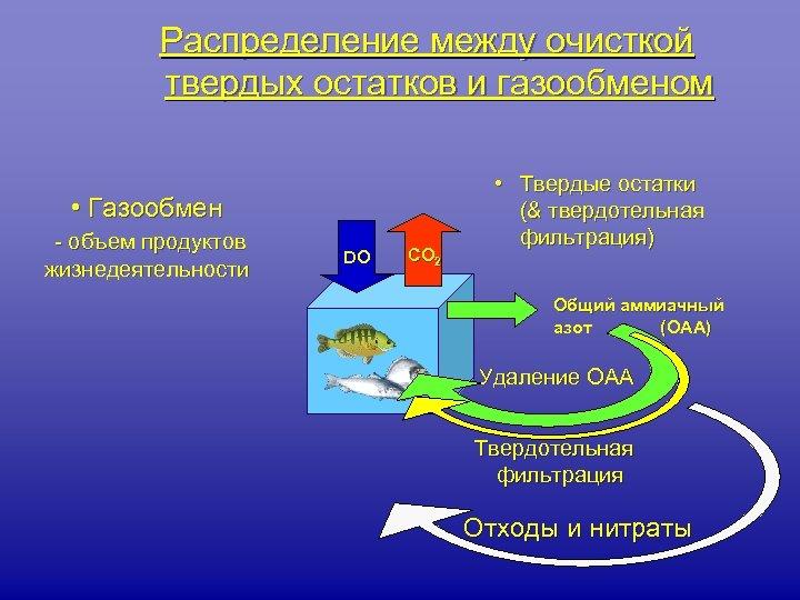 Распределение между очисткой твердых остатков и газообменом • Газообмен - объем продуктов жизнедеятельности DO