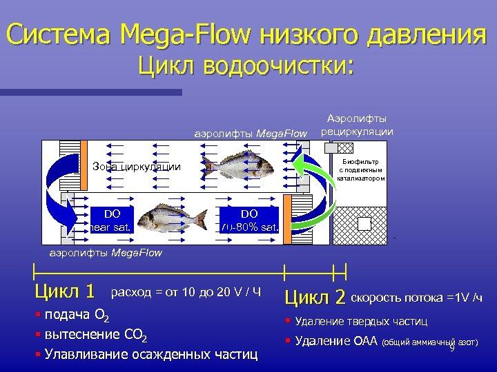 Система Mega-Flow низкого давления Цикл водоочистки: аэролифты Mega. Flow Биофильтр с подвижным катализатором Зона