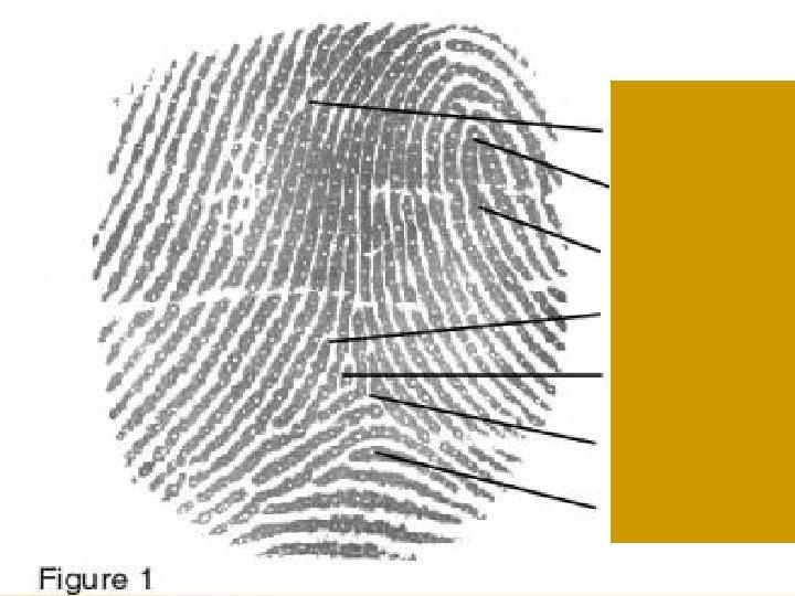 Fingerprints Chapter 4 30 30