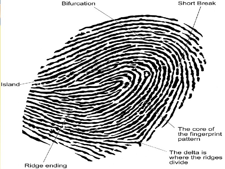 Fingerprints Chapter 4 31 31