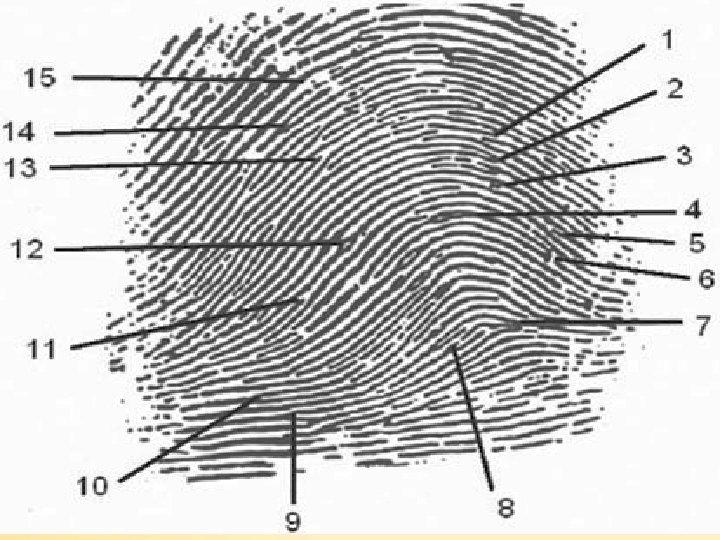 Fingerprints Chapter 4 34 34