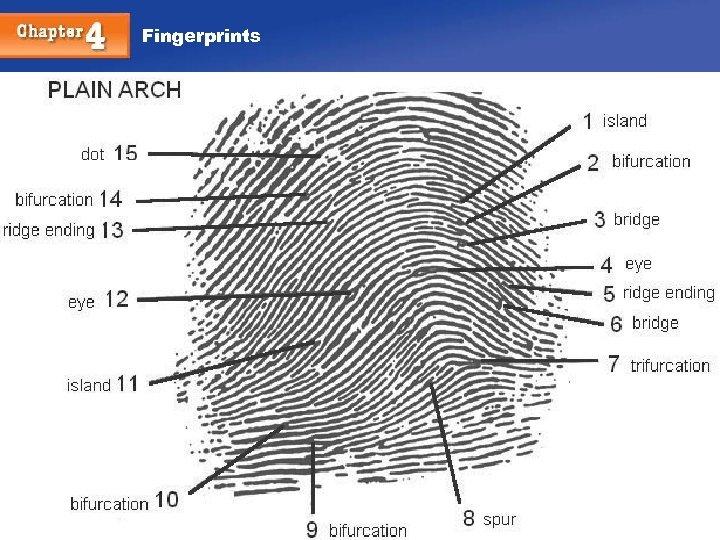 Fingerprints Chapter 4 35 35