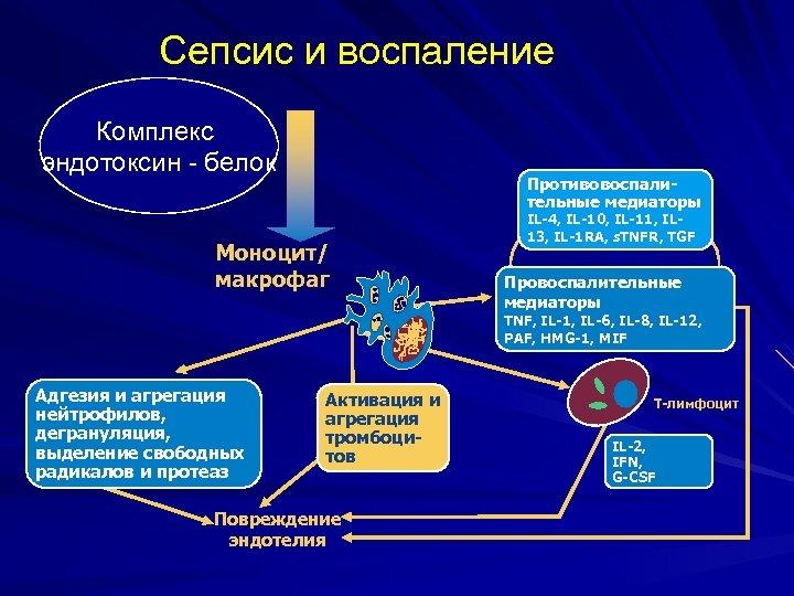 Сепсис и воспаление Комплекс эндотоксин - белок Противовоспалительные медиаторы Моноцит/ макрофаг IL-4, IL-10, IL-11,