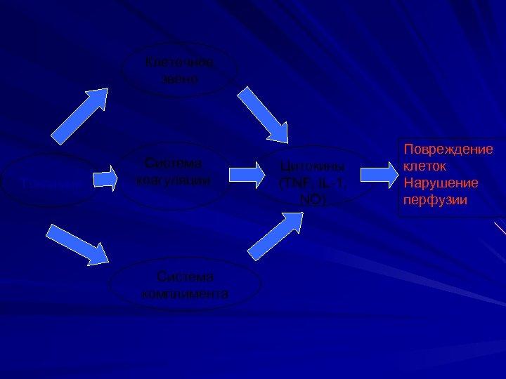 Клеточное звено Токсимия Система коагуляции Система комплимента Цитокины (TNF, IL-1, NO) Повреждение клеток Нарушение