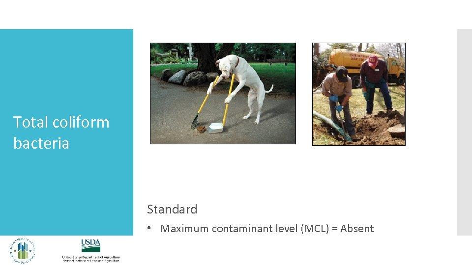Total coliform bacteria Standard • Maximum contaminant level (MCL) = Absent