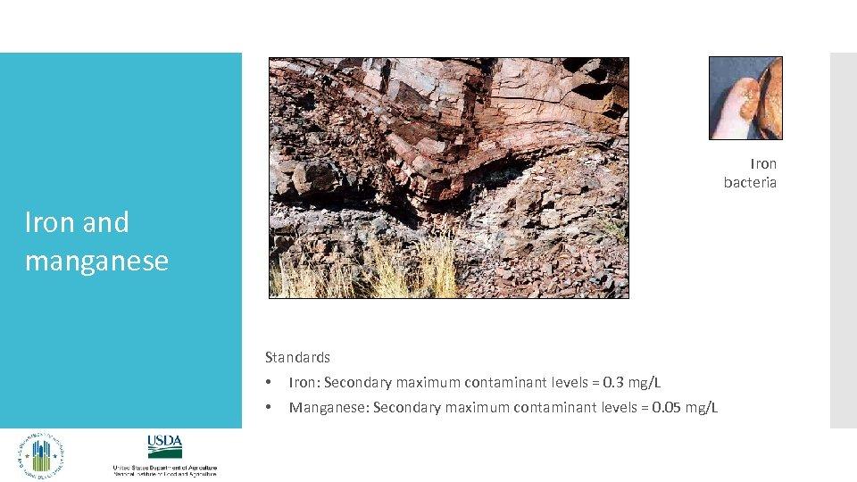 Iron bacteria Iron and manganese Standards • Iron: Secondary maximum contaminant levels = 0.