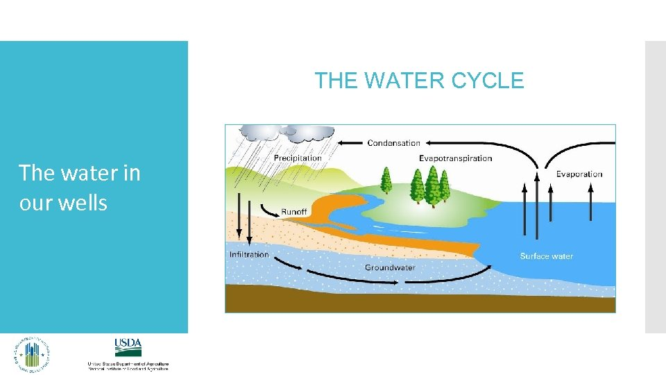 THE WATER CYCLE The water in our wells