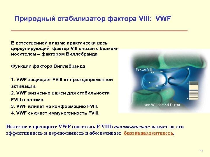 Природный стабилизатор фактора VIII: VWF В естественной плазме практически весь циркулирующий фактор VIII связан