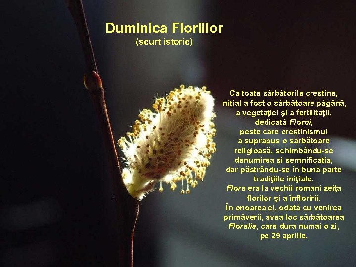 Duminica Floriilor (scurt istoric) Ca toate sărbătorile creştine, iniţial a fost o sărbătoare păgână,