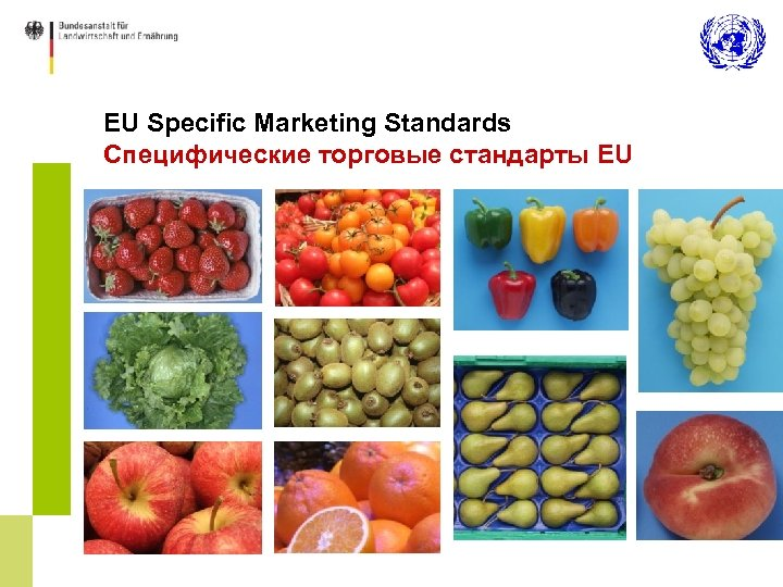 EU Specific Marketing Standards Специфические торговые стандарты EU