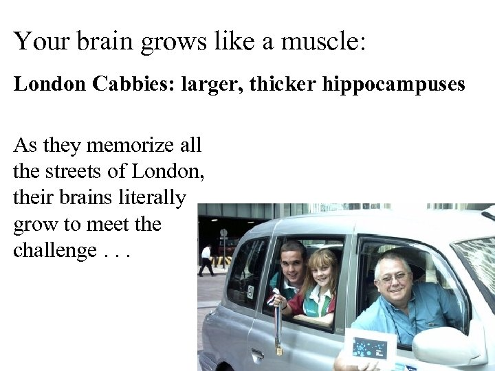 Your brain grows like a muscle: London Cabbies: larger, thicker hippocampuses As they memorize