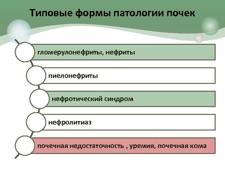 Типовые формы патологии почек гломерулонефриты, нефриты пиелонефриты нефротический синдром нефролитиаз почечная недостаточность , уремия,