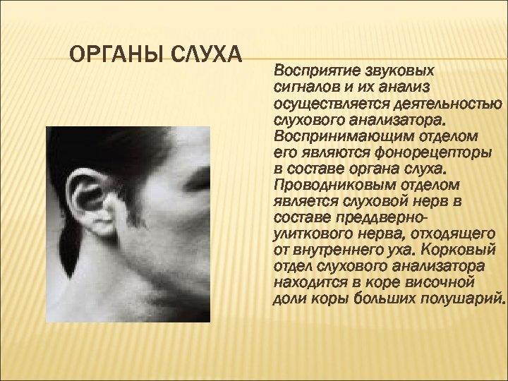 ОРГАНЫ СЛУХА Восприятие звуковых сигналов и их анализ осуществляется деятельностью слухового анализатора. Воспринимающим отделом