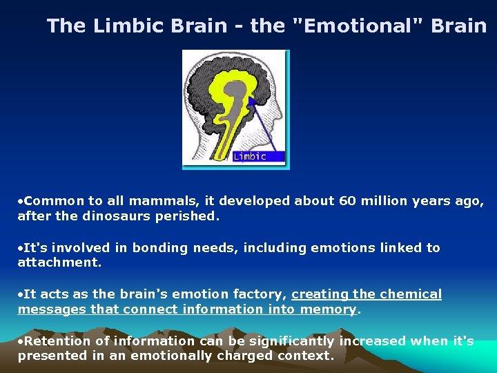 The Limbic Brain - the