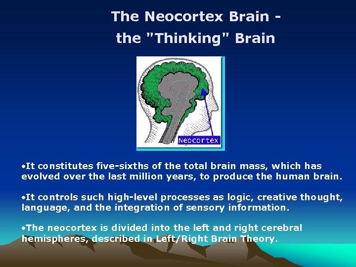 The Neocortex Brain the