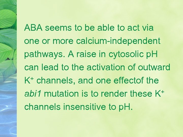ABA seems to be able to act via one or more calcium-independent pathways. A