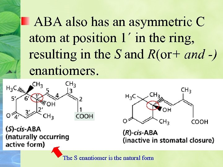 ABA also has an asymmetric C atom at position 1´ in the ring, resulting