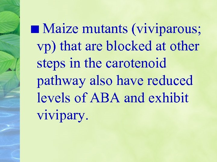 Maize mutants (viviparous; vp) that are blocked at other steps in the carotenoid pathway