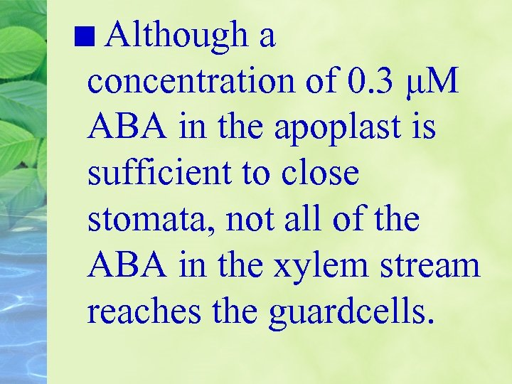 Although a concentration of 0. 3 μM ABA in the apoplast is sufficient to
