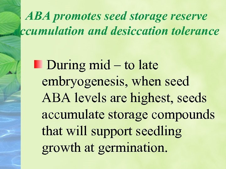 ABA promotes seed storage reserve accumulation and desiccation tolerance During mid – to late