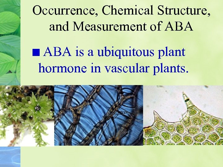 Occurrence, Chemical Structure, and Measurement of ABA is a ubiquitous plant hormone in vascular