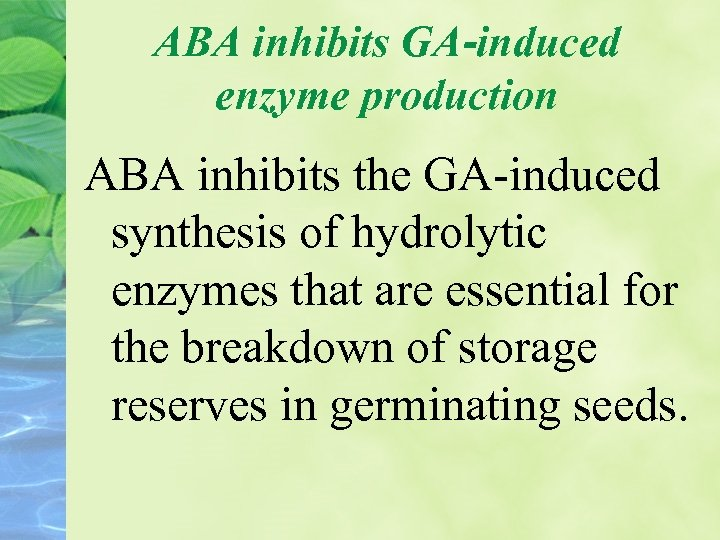 ABA inhibits GA-induced enzyme production ABA inhibits the GA-induced synthesis of hydrolytic enzymes that