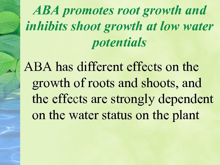 ABA promotes root growth and inhibits shoot growth at low water potentials ABA has