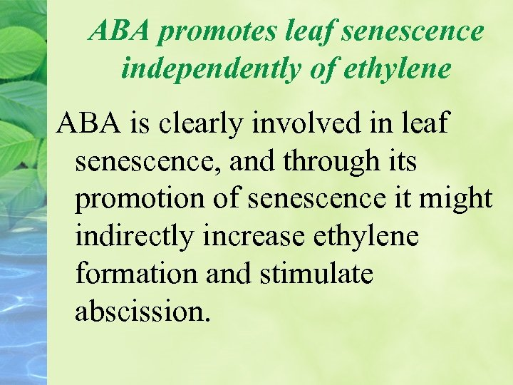 ABA promotes leaf senescence independently of ethylene ABA is clearly involved in leaf senescence,
