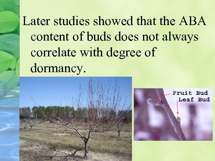 Later studies showed that the ABA content of buds does not always correlate with