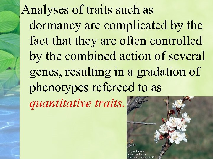 Analyses of traits such as dormancy are complicated by the fact that they are