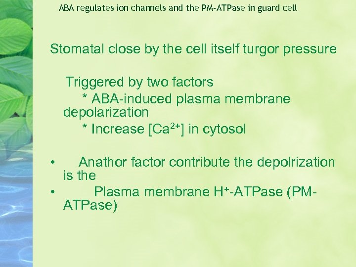 ABA regulates ion channels and the PM-ATPase in guard cell Stomatal close by the