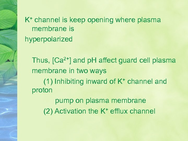 K+ channel is keep opening where plasma membrane is hyperpolarized Thus, [Ca 2+] and