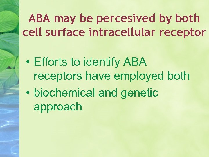 ABA may be percesived by both cell surface intracellular receptor • Efforts to identify