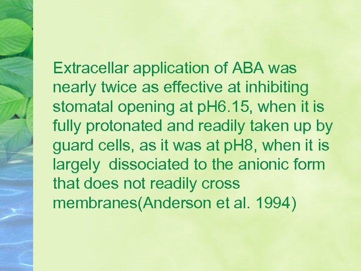 Extracellar application of ABA was nearly twice as effective at inhibiting stomatal opening at