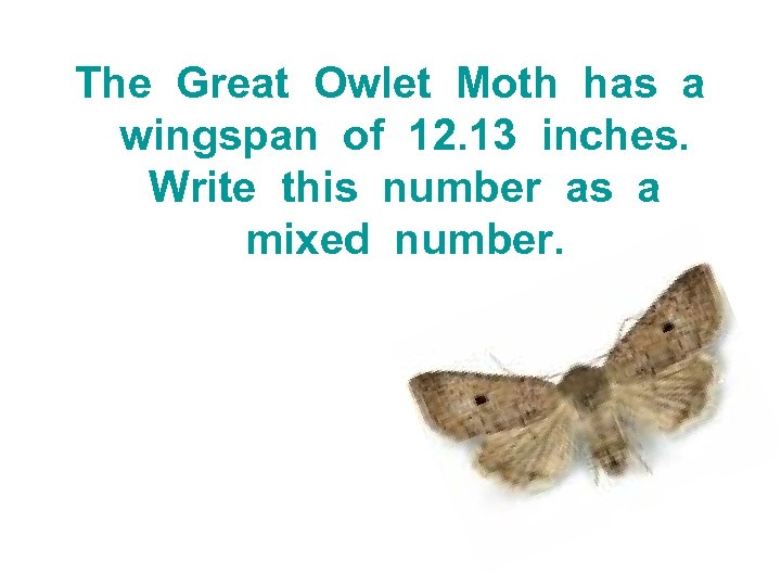 The Great Owlet Moth has a wingspan of 12. 13 inches. Write this number