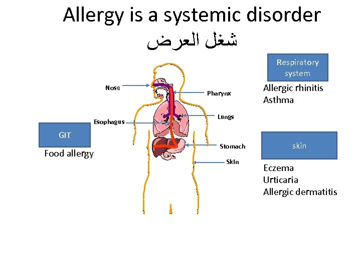 Allergy is a systemic disorder ﺷﻐﻞ ﺍﻟﻌﺮﺽ Respiratory system Nose Esophagus Pharynx Lungs GIT