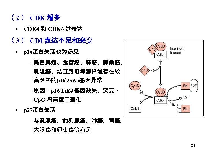 ( 2 ) CDK 增多 • CDK 4 和 CDK 6 过表达 ( 3