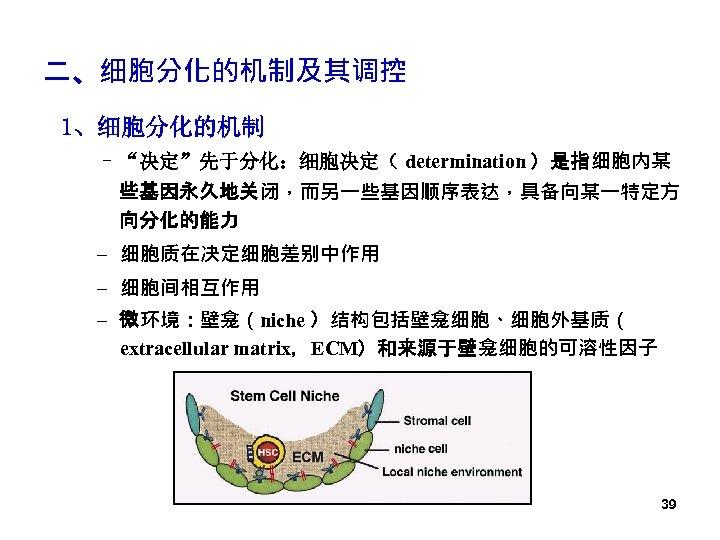 """二、细胞分化的机制及其调控 1、细胞分化的机制 – """"决定""""先于分化:细胞决定( determination )是指细胞内某 些基因永久地关闭,而另一些基因顺序表达,具备向某一特定方 向分化的能力 – 细胞质在决定细胞差别中作用 – 细胞间相互作用 – 微环境:壁龛(niche"""