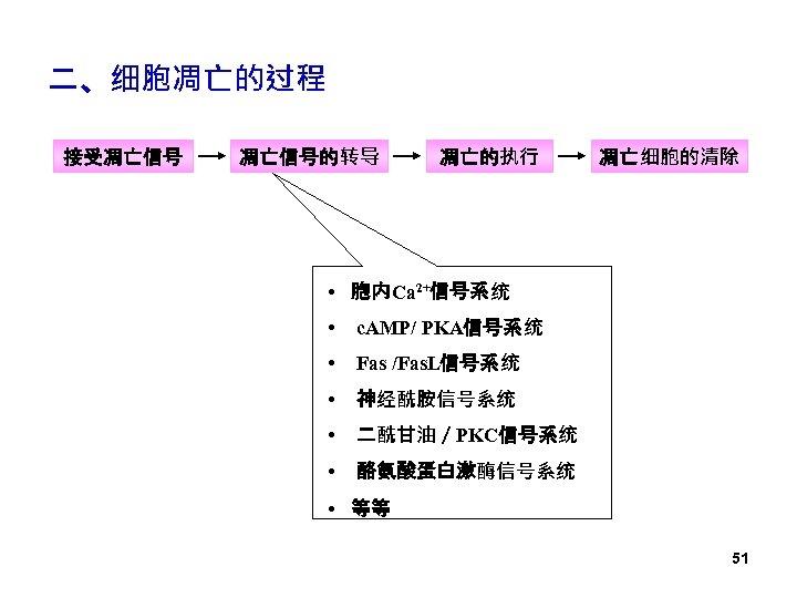 二、细胞凋亡的过程 接受凋亡信号的转导 凋亡的执行 凋亡细胞的清除 • 胞内Ca 2+信号系统 • c. AMP/ PKA信号系统 • Fas /Fas.