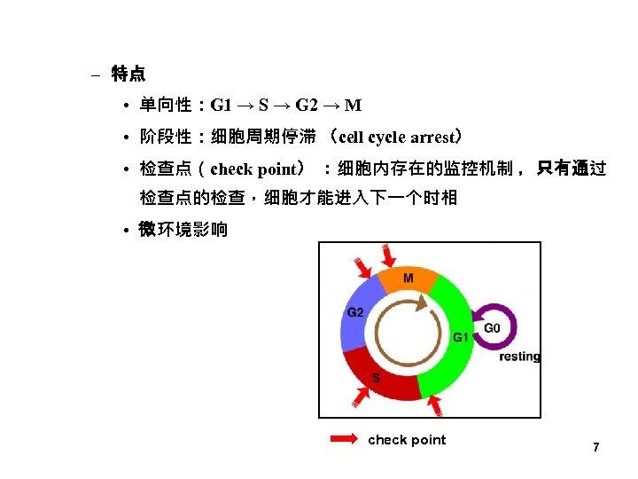 – 特点 • 单向性:G 1 → S → G 2 → M • 阶段性:细胞周期停滞