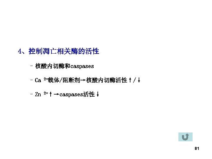 4、控制凋亡相关酶的活性 – 核酸内切酶和caspases – Ca 2+载体/阻断剂→核酸内切酶活性↑/↓ – Zn 2+↑→caspases活性↓ 81