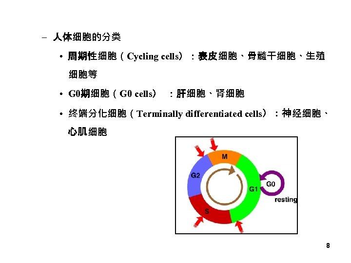 – 人体细胞的分类 • 周期性细胞(Cycling cells):表皮细胞、骨髓干细胞、生殖 细胞等 • G 0期细胞(G 0 cells) :肝细胞、肾细胞 • 终端分化细胞(Terminally