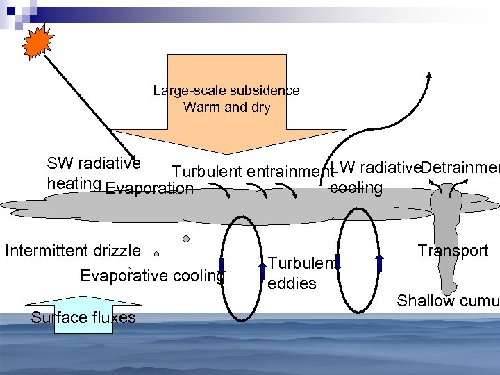 Large-scale subsidence Warm and dry SW radiative LW radiative. Detrainmen Turbulent entrainment heating Evaporation